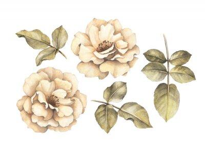 Quadro Illustrazione di matita di rose
