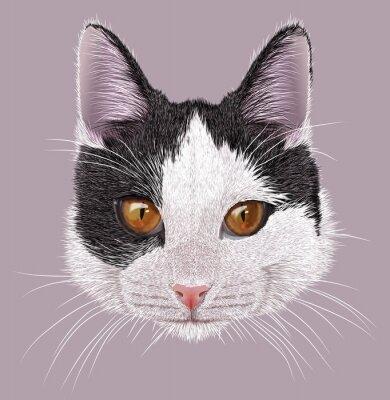 Quadro Illustrazione Ritratto di gatto domestico. Cute giovane gatto bicolore con gli occhi arancioni.