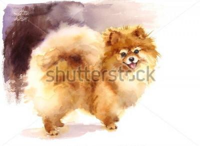 Quadro Illustrazione sveglia degli animali domestici dipinta a mano del ritratto di Pomeranian del cane dell'acquerello