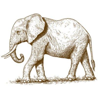 Quadro illustrazione vettoriale di elefante incisione