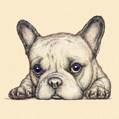Quadro incidere cane illustrazione