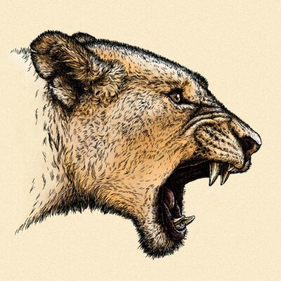 Quadro incidere leone illustrazione