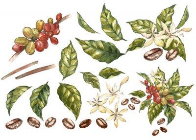 Quadro Insieme dei fagioli rossi di arabica del caffè sul ramo con i fiori isolati, illustrazione dell'acquerello.