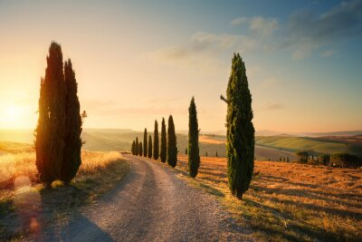 Quadro italy tuscany countryside rolling hills; summer farmland and country road;