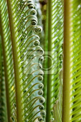 Quadro Jeune Palmes de cycas