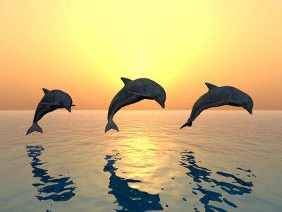 Quadro Jumping Dolphins