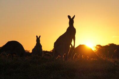 Quadro Kangaroo sagome al tramonto