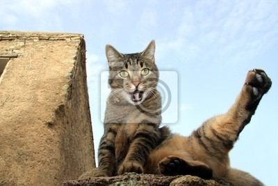 Quadro Karaté cat