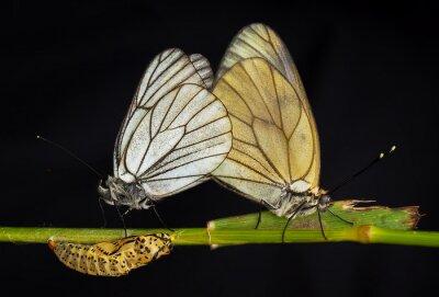 Quadro Kelebekler
