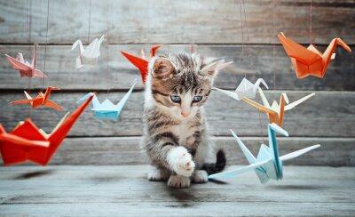 Quadro Kitten sta giocando con gru di carta