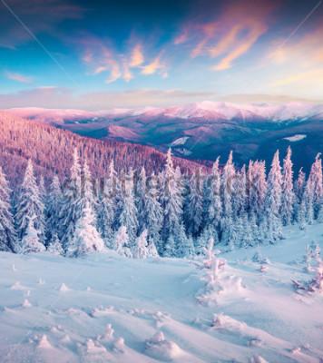 Quadro L'alba fantastica di inverno in montagne carpatiche con la neve ha ammassato gli alberi. Scena all'aperto colorato, concetto di celebrazione del buon anno. Foto elaborata post stile artistico