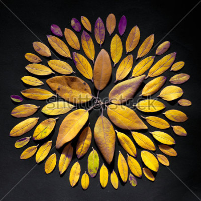 Quadro La disposizione fatta a mano della tastiera del foglio piana su fondo nero. Disposizione di mandala boema fatta di foglie.