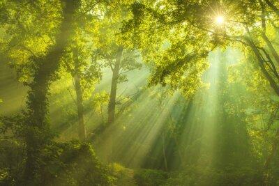 Quadro La Foresta del Cielo