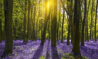 Quadro La luce del sole proietta ombre attraverso giacinti in un bosco