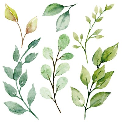 Quadro Leaves watercolor set. Hand painting floral illustration. Green leaf, plants, foliage, branches isolated on white background.