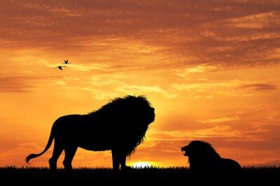 Quadro leone silhouette al tramonto