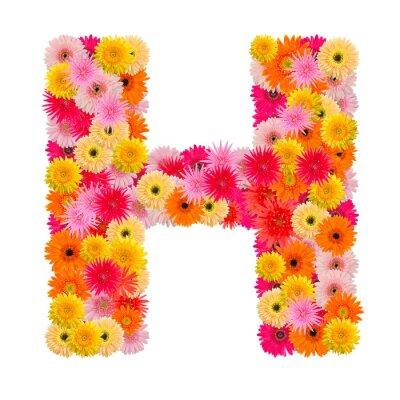 Quadro Lettera H alfabeto con gerbera isolato su sfondo bianco