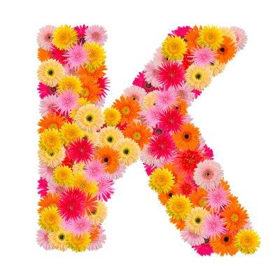 Quadro Lettera K alfabeto con gerbera isolato su sfondo bianco