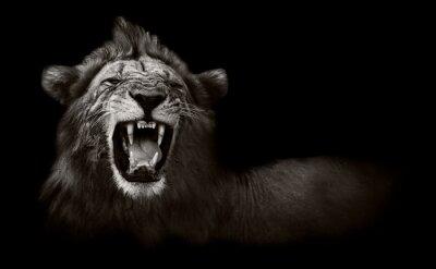 Quadro Lion visualizzazione pericolosi denti