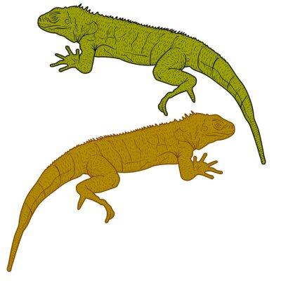 Quadro Lizard è silhouette goanna su uno sfondo bianco. illustrazione di vettore
