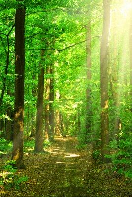 Quadro luce del sole foresta