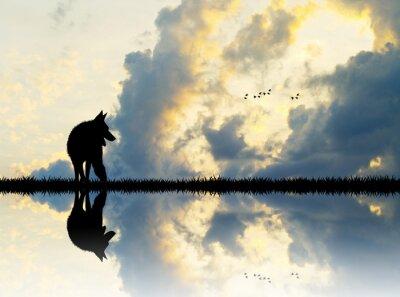 Quadro lupo sul fiume al tramonto