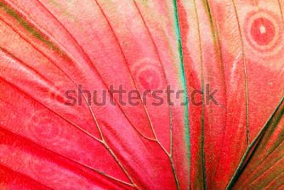 Quadro Macro foto dettagliata di un'ala di farfalla tropicale rossa