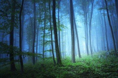 Quadro Magia luce di colore blu in Forrest mistico
