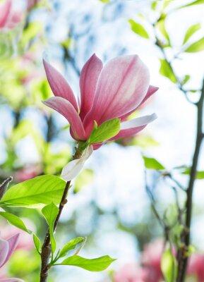 Quadro Magnolia fiori nel parco