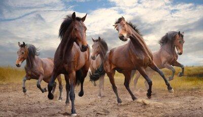 Quadro mandria di cavalli
