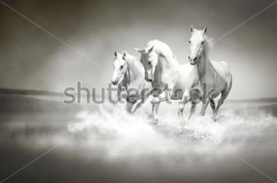 Quadro Mandrià di cavalli bianchi che attraversano l'acqua