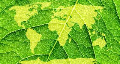Quadro Mappa del mondo, continenti in foglia verde.