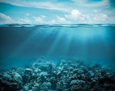 Quadro Mare o oceano subacqueo sfondo natura profonda