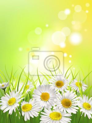 Quadro Margherite bianche in un prato. Primavera o estate sfondo.