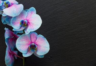 Quadro Mazzo di orchidee viola