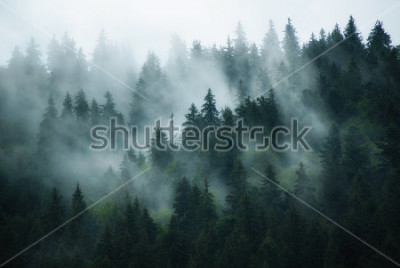 Quadro Misty landscape with fir forest in hipster vintage retro style