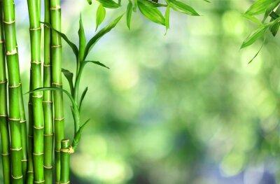 Quadro Molti gambi di bambù su fondo