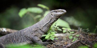 Quadro Monitor Lizard
