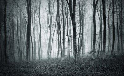 Quadro Monocromatico in bianco e nero del grunge di colore strutturato nebbia alberi della foresta Paesaggio mistico.
