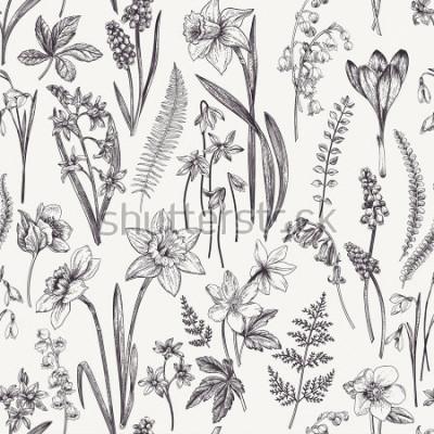 Quadro Motivo floreale senza giunte d'epoca. Fiori primaverili ed erbe Illustrazione botanica Narciso, mughetto, Elleboro, bucaneve, croco. Incisione. Bianco e nero.