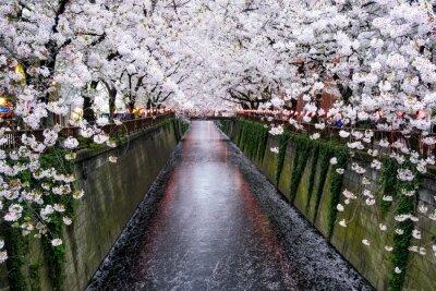 Quadro Nakameguro Kanal a Tokio während der Kirschblüte im Frühling