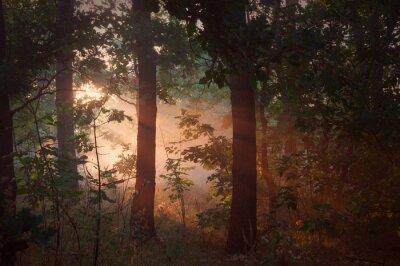 Quadro Nebbia del mattino nella foresta