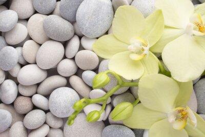Quadro Orchid.