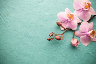 Quadro Orchidea.