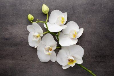 Quadro Orchidea bianca su sfondo grigio.