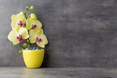 Quadro Orchidea gialla su sfondo grigio.