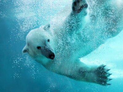 Quadro Orso polare attacco subacqueo