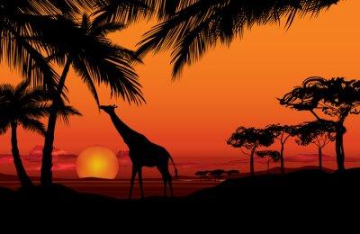 Quadro Paesaggio africano con silhouette animali giraffe. natura Savanna sfondo tramonto