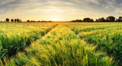 Quadro paesaggio Campo di grano con il percorso nel tempo di tramonto