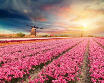 Quadro Paesaggio con tulipani, mulini a vento tradizionali olandesi e case vicino al canale a Zaanse Schans, Paesi Bassi, Europa